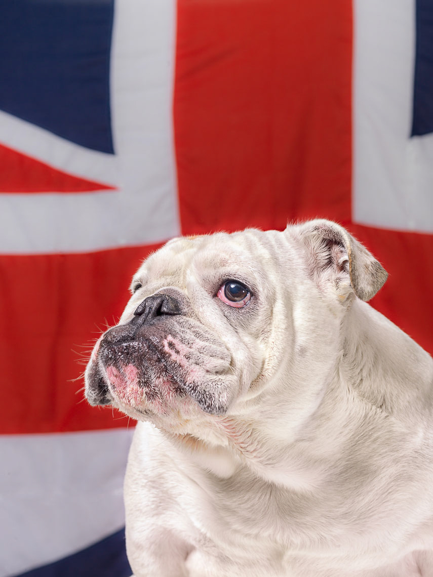 More-than-british-dogs-263