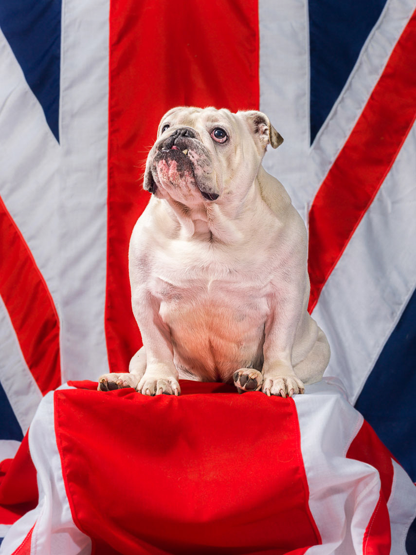 More-than-british-dogs-403-Edit